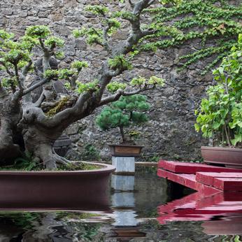 Japanischen Garten selbst anlegen