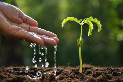 10 häufige Gartenirrtümer