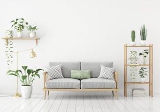 Gr ne deko im haus zimmerpflanzen in szene setzen for Zimmerpflanzen in szene setzen