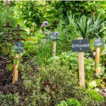 Kräutergarten anlegen: Tipps & Tricks