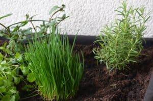 Rankhilfen sorgen dafür, dass sich die Pflanze nicht zur Seite ausbreitet