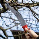 Obstbaum schneiden: Für ertragreichere Ernten