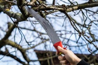 Obstbaum Schneiden obstbaum schneiden für ertragreichere ernten hausliebe