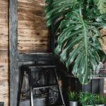 Zu Hause im Grünen - Dekorieren mit Zimmerpflanzen