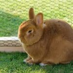 Kaninchengehege bauen: Anleitung für ein einfaches Außengehege