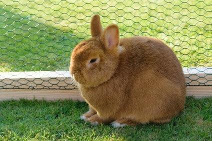 Kaninchengehege Bauen Anleitung Fur Ein Einfaches Aussengehege